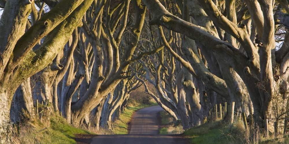 Dark Hedges tree lane, Ireland