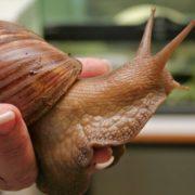 snail farming in nigeria